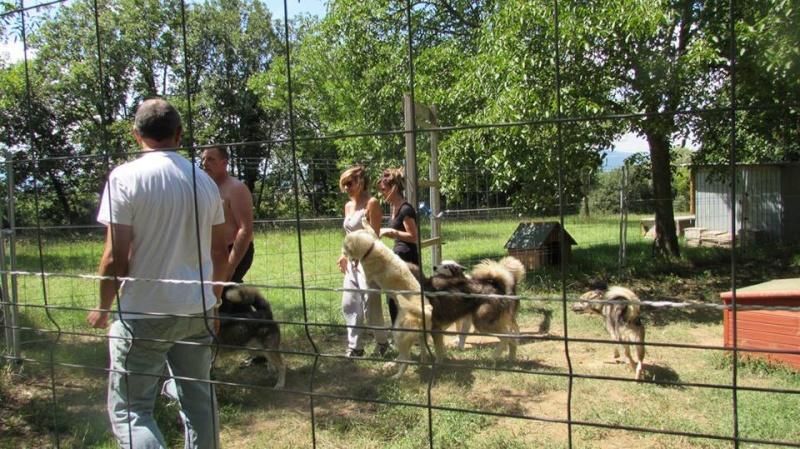 LES CHIENS DE NICOLAS VANIER à l'Asso Eden Valley, aidons les! Instal11