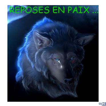 LUCKY Husky 16 ans et demi ASSO65  DECEDE - Page 3 Repose10