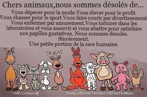 Chers animaux Chers_10