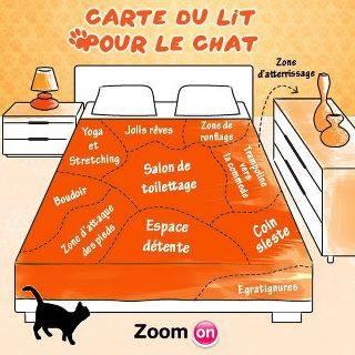 Images du jour sur les chats - Page 4 10349010