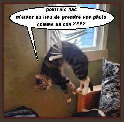 Images du jour sur les chats - Page 5 10888810