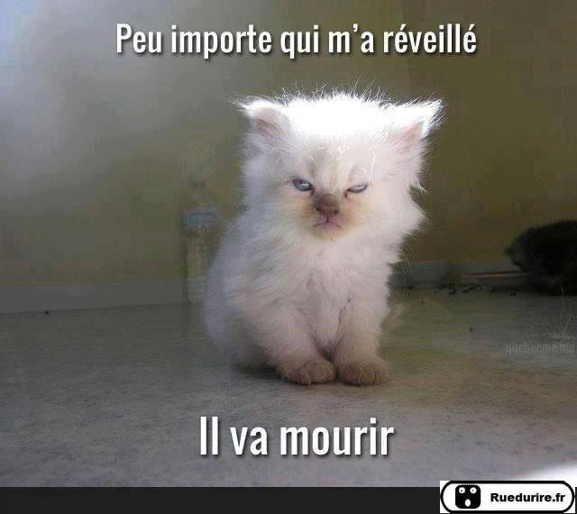 Images du jour sur les chats - Page 4 Img_8710