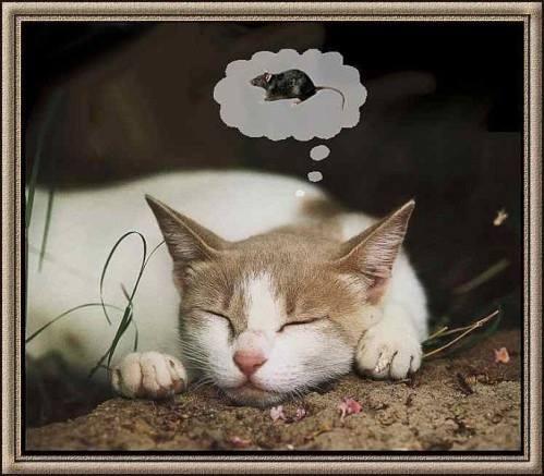 Images du jour sur les chats - Page 4 Img_8711