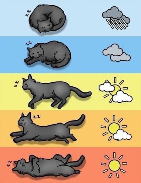 Images du jour sur les chats - Page 2 Img_8810