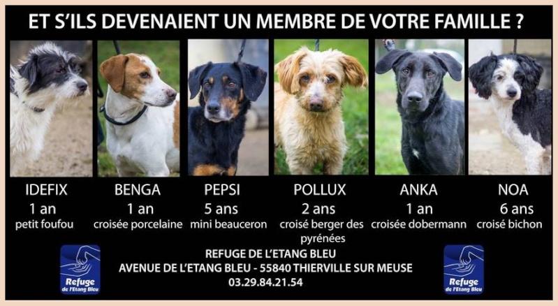 Adoptez moi - RUBI - x berger 7 ans - Refuge de Thierville (55) 54192410