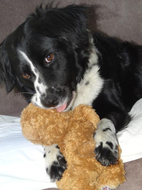Le jouet préféré de votre chien - Page 3 Aa11