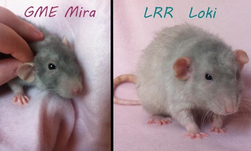 GME Mira x LRR Loki [covoiturage : Nantes/tours/chartres/Paris/oise] Couple10