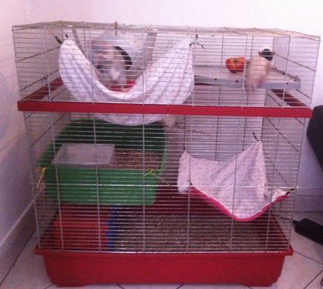 Vends/échange cage Imac10