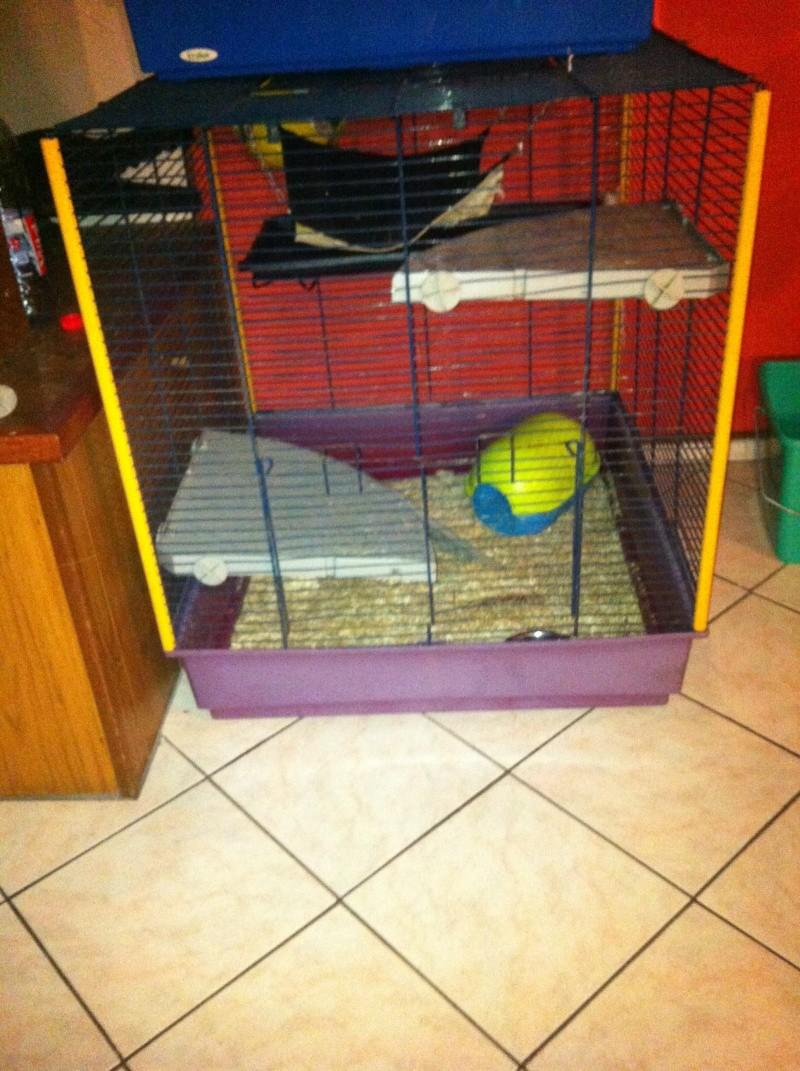 Vends/échange cage Img_3110