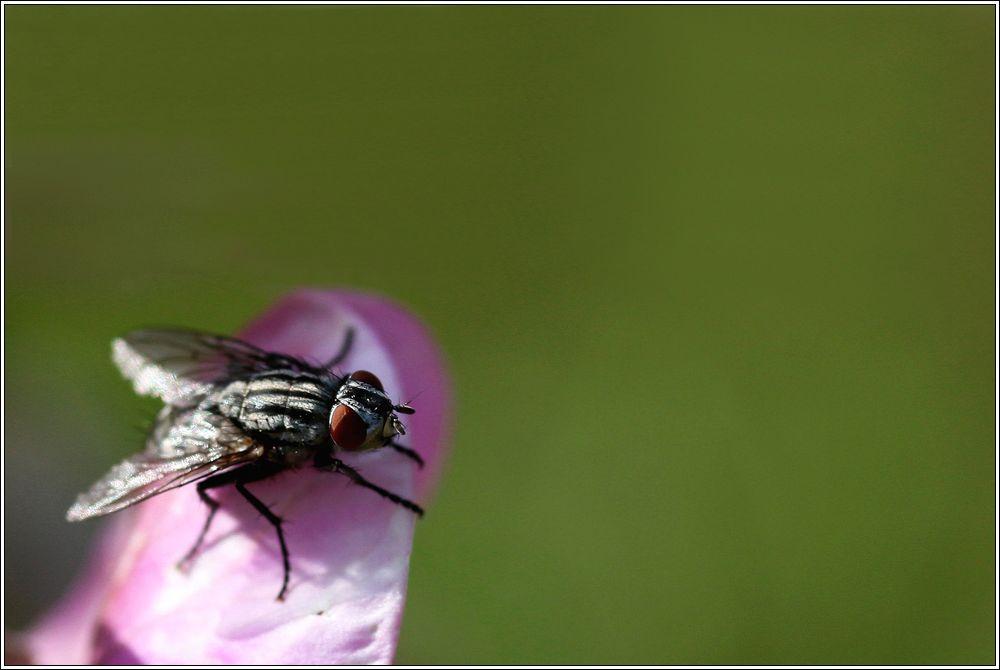 Une mouche Img_3311