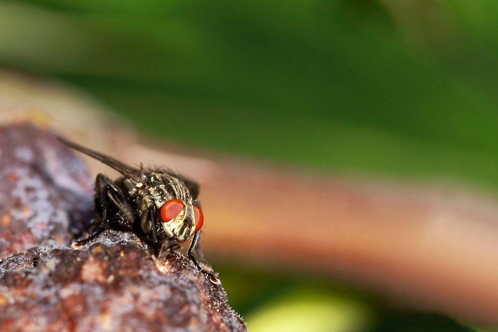 Bonne appétit les mouches Img_4710