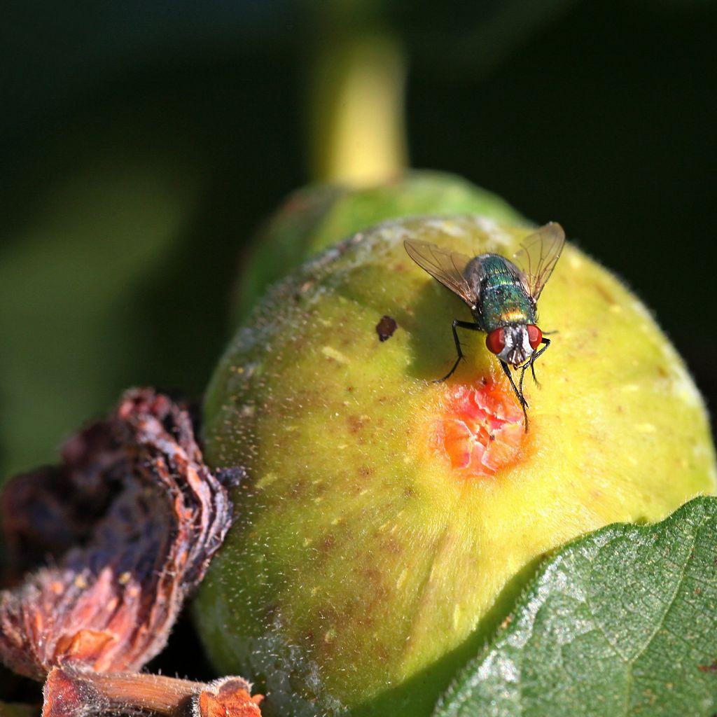 Bonne appétit les mouches Img_4711
