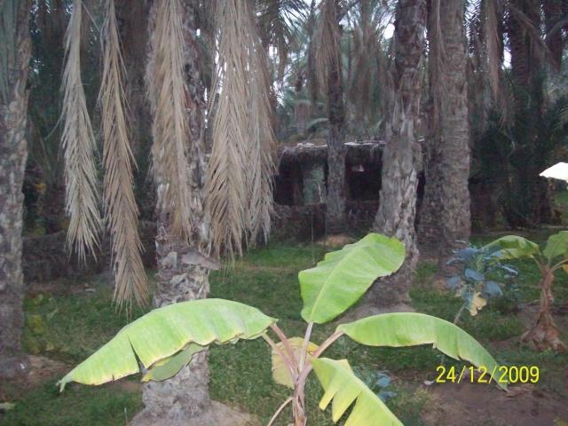 La Tunisie pays démocratique... Joudhu18