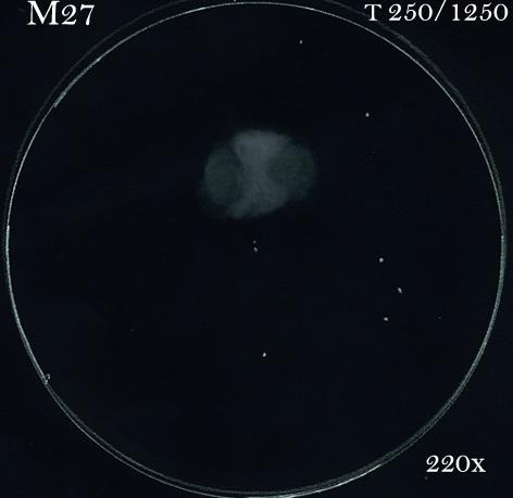"""Petit """"Best Of"""" d'astro M2725010"""