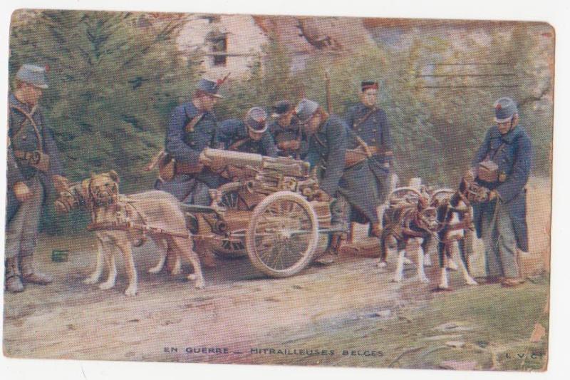 Les animaux au front Belge11