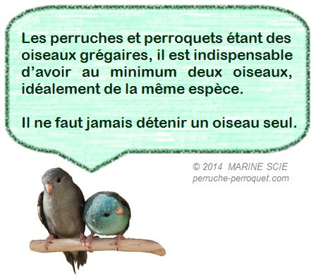 Perruches et Perroquets : alimentation, environnement, et soins. - Portail Icone110