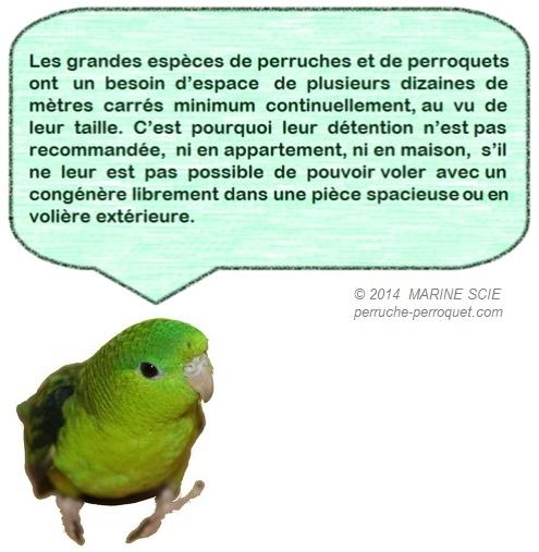 Perruches et Perroquets : alimentation, environnement, et soins. - Portail Icone210