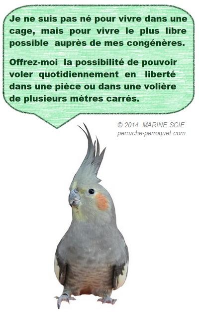 Perruches et Perroquets : alimentation, environnement, et soins. - Portail Icone510