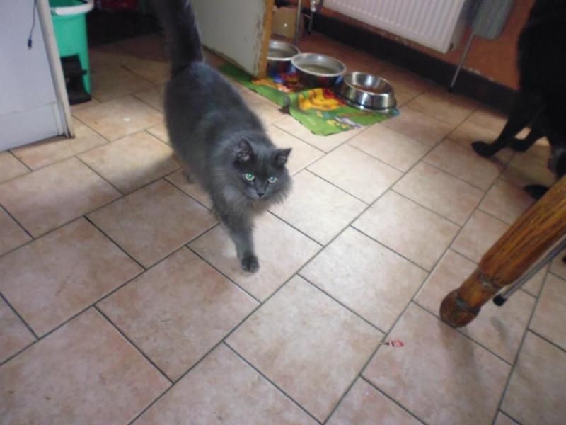 Toulouse chaton gris de 3 mois. - Page 3 10259313