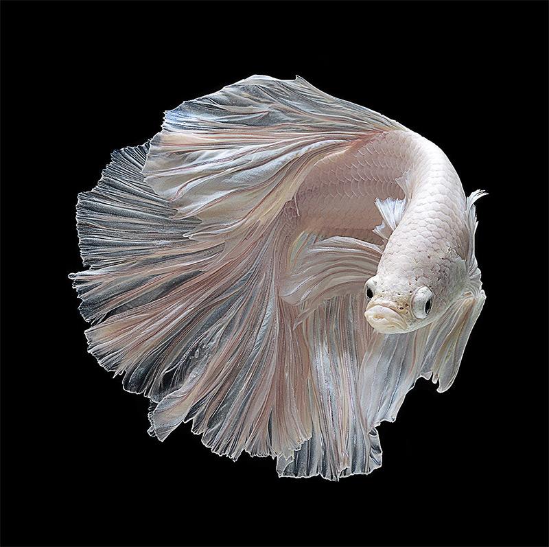 โค่ย Fish-110
