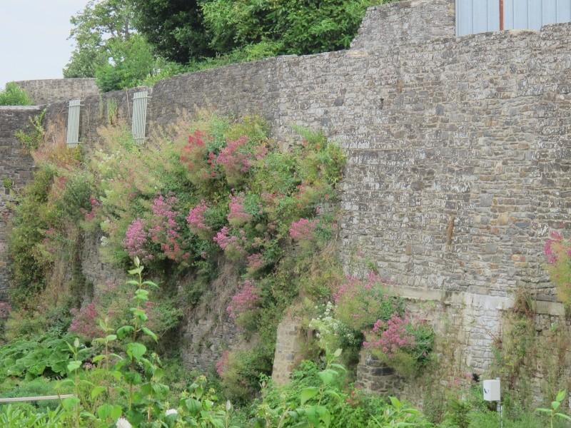 Le Pays de Dol de Bretagne Bretag17