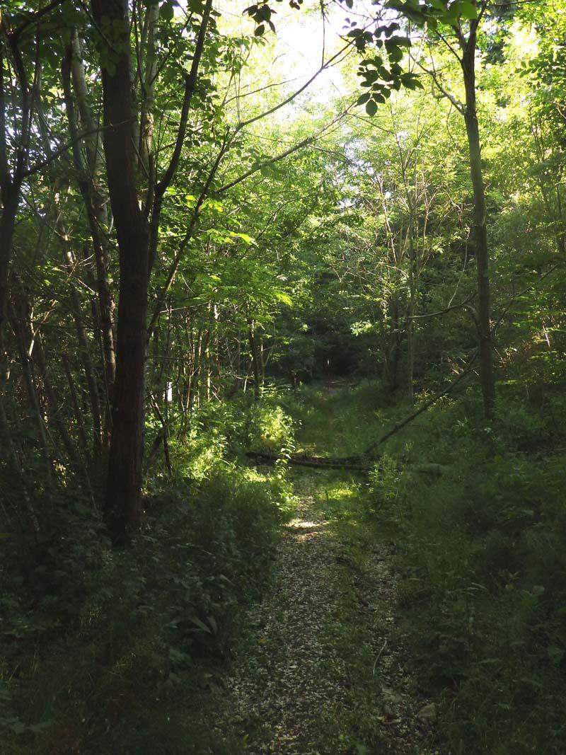 petite ballade dans les sous bois P6110610
