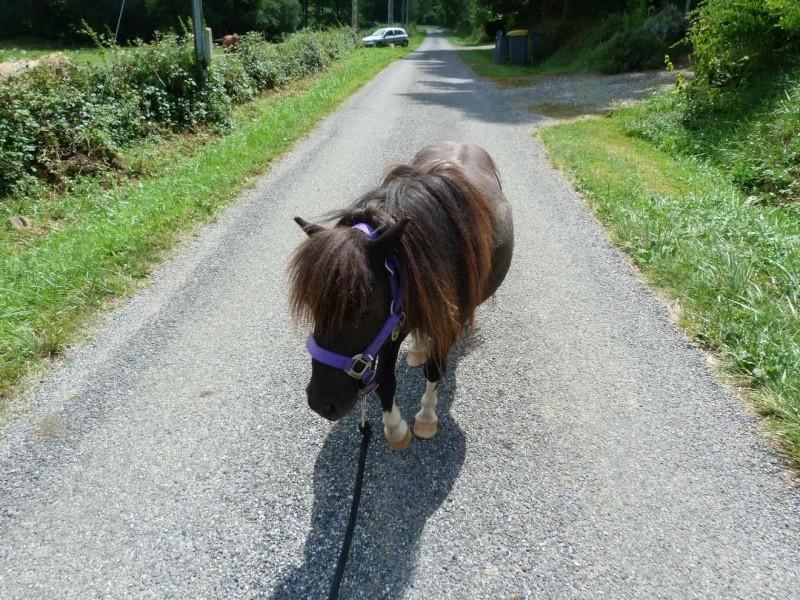 (Dept19) BIJOUX, Shetland, réservé par Lola1605 !!!! (Octobre 2012) - Page 8 Pepi10