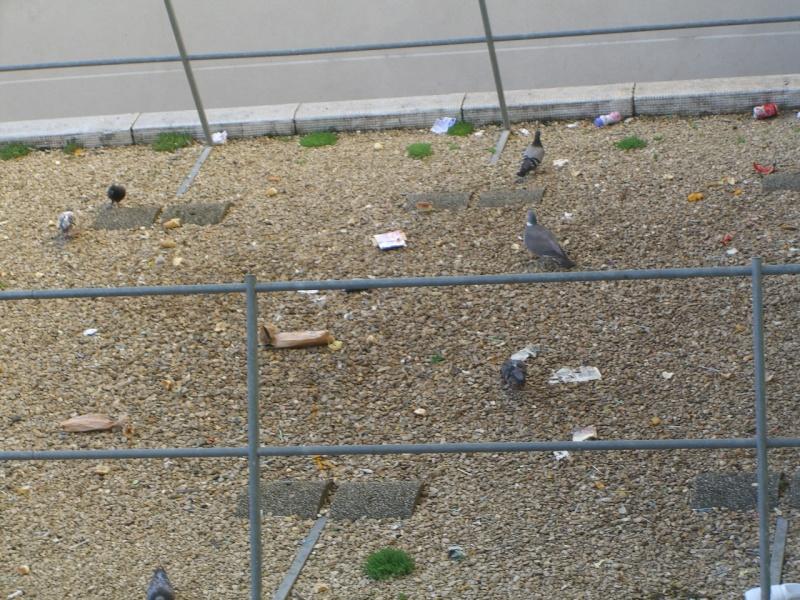 Problèmes insalubrité / stationnement / sécurité rue de Meudon - Page 2 Cimg5911