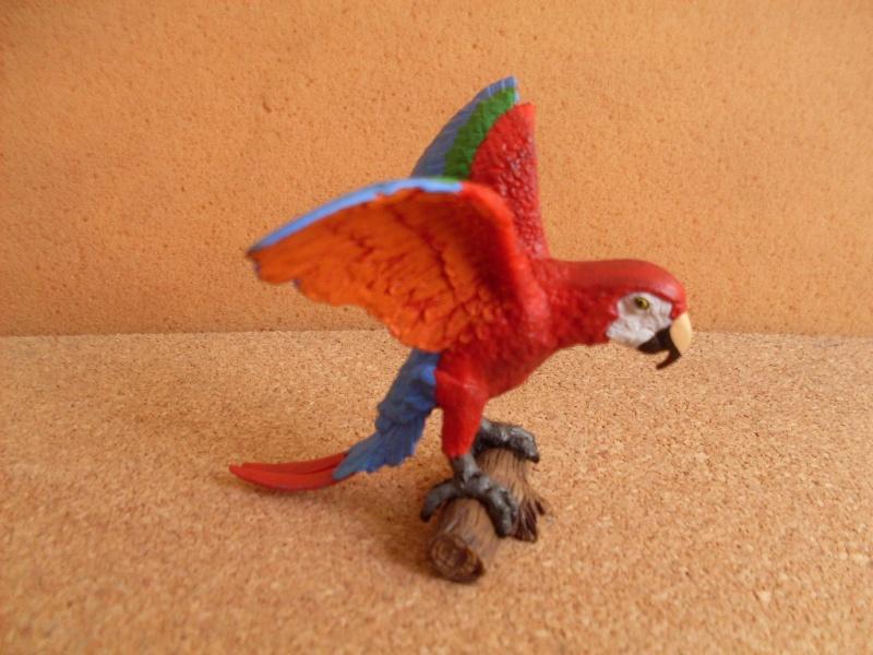 Ara parrot Ara_pa10