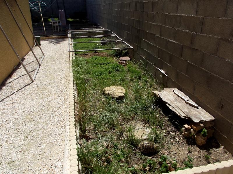 photos de mes tortues Dscf1310
