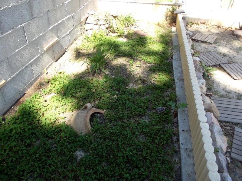 photos de mes tortues Dscf1311