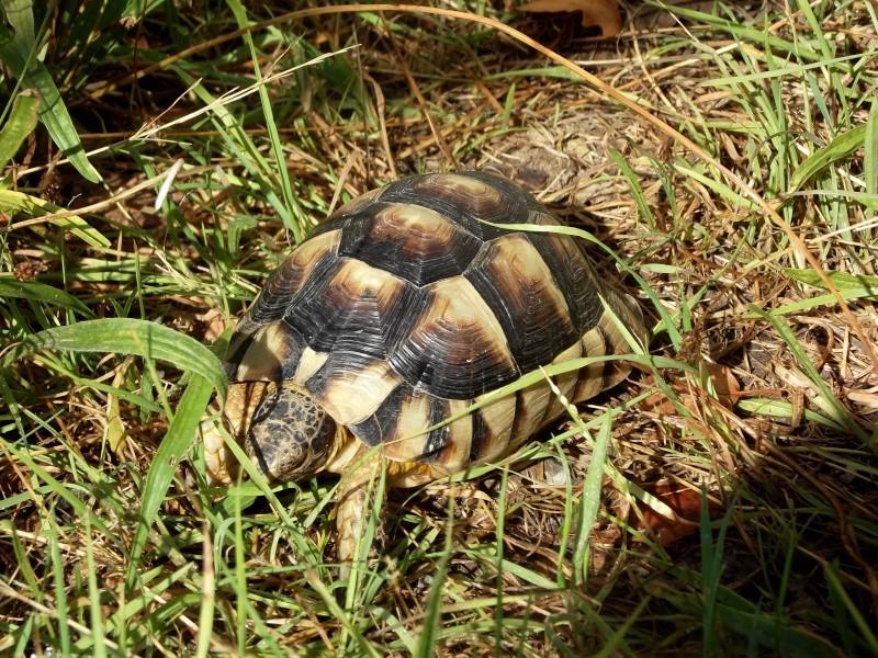 photos de mes tortues Dscf4111