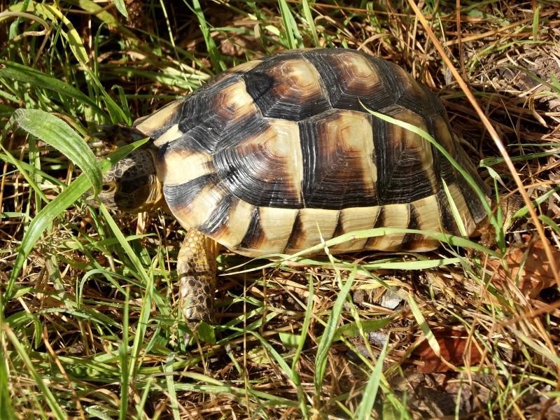 photos de mes tortues Dscf4112