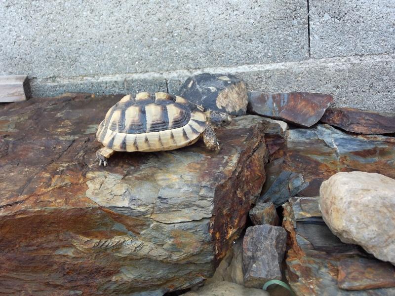 photos de mes tortues Dscf4113