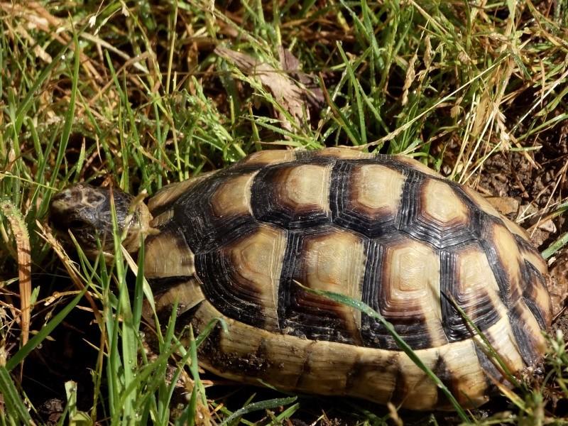 photos de mes tortues Dscf4115
