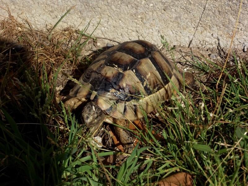 photos de mes tortues Dscf4116