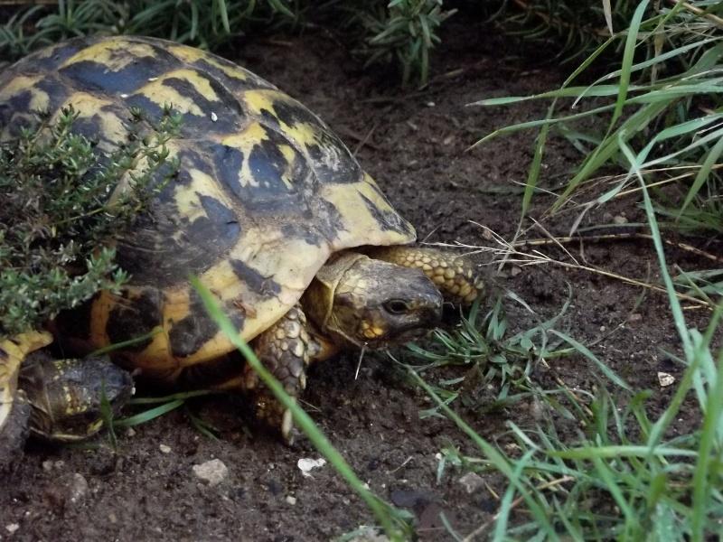 photos de mes tortues Dscf4118