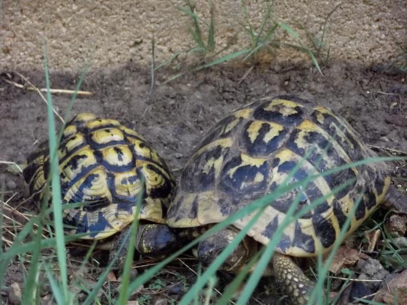 photos de mes tortues Dscf4119
