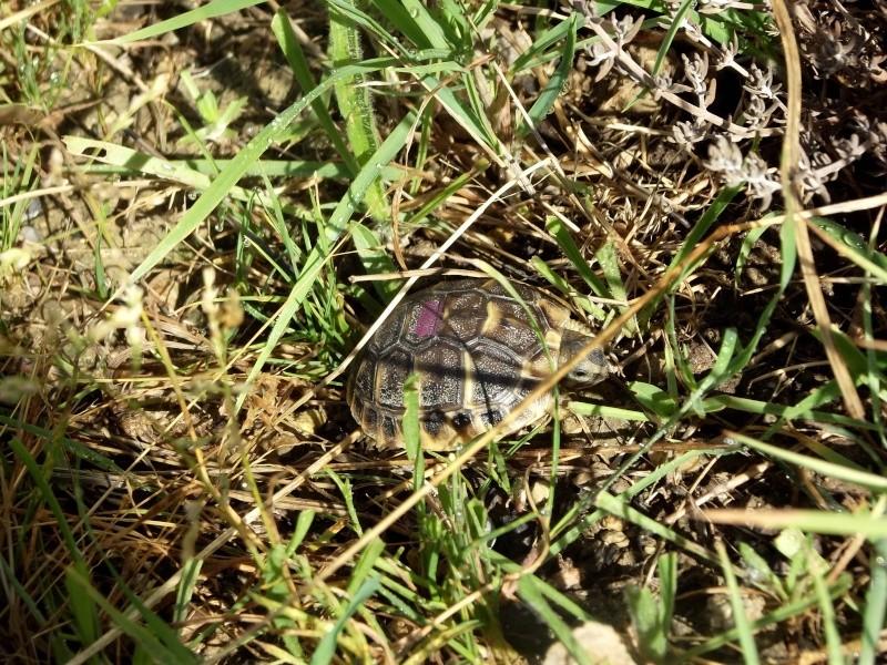 photos de mes tortues Dscf4120