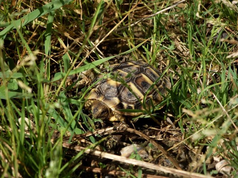 photos de mes tortues Dscf4122