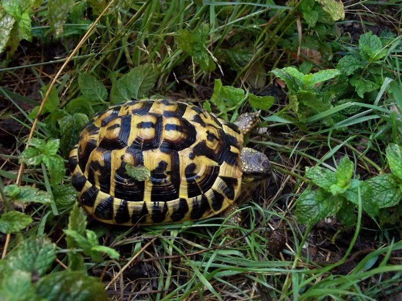 photos de mes tortues Luigi10