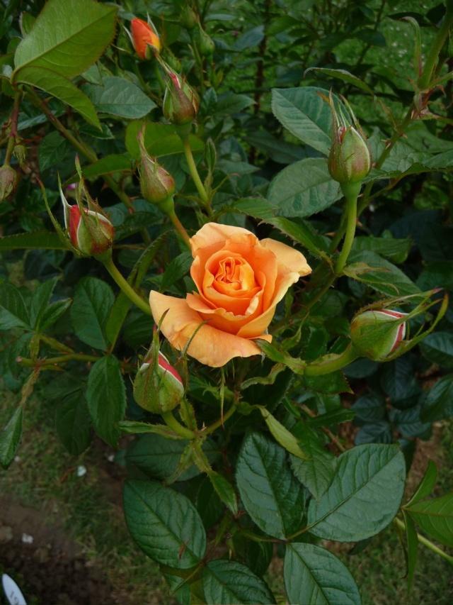 ART DU JARDIN jardins d'exception, fleurs d'exception - Page 2 1_1_1_78
