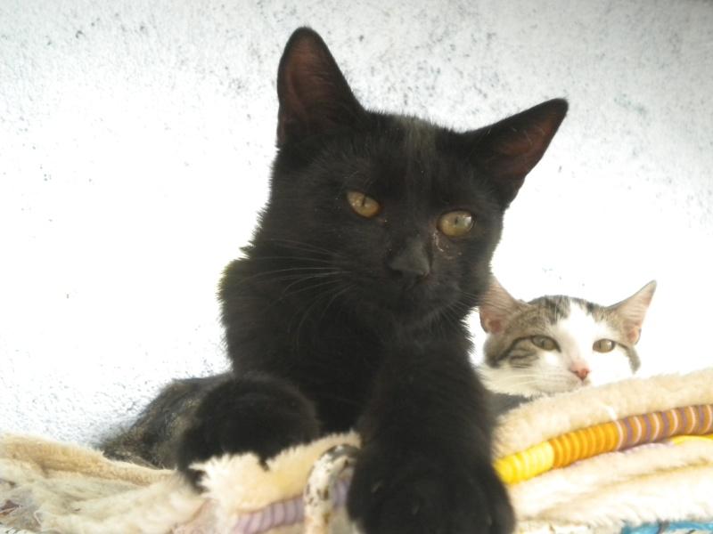 URANUS (chaton mâle noir) Réservé Photo_14