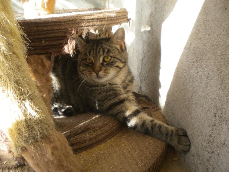 ELVIS (chaton mâle tigré noir) Photo_16