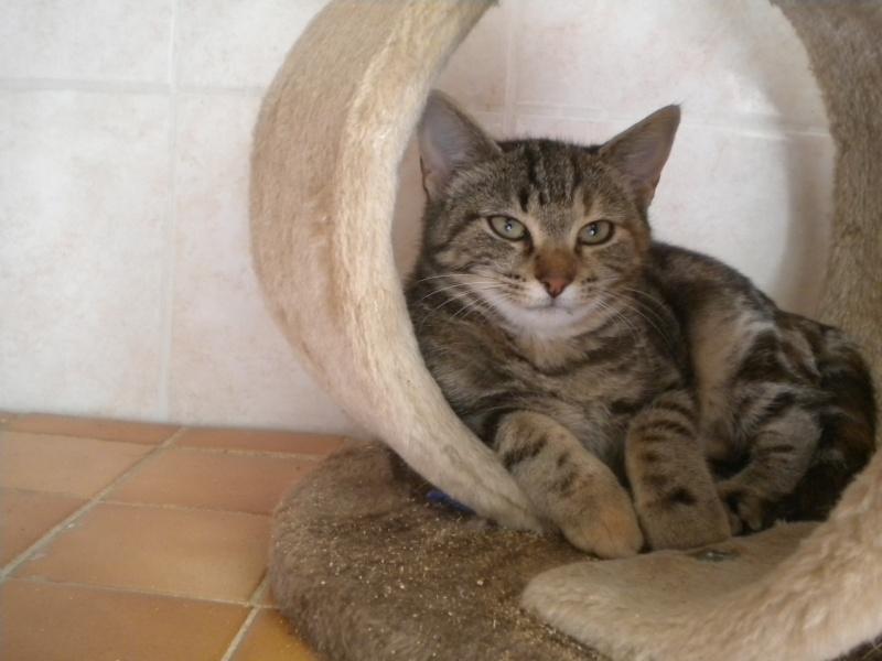 PEPITE (chatte femelle tigrée) Photo_29