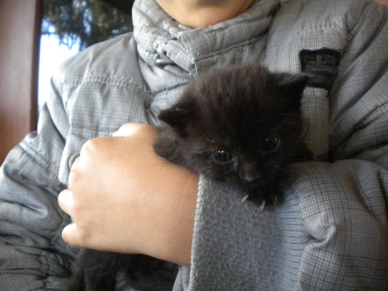 TITOF (chaton noir) Sos_0510