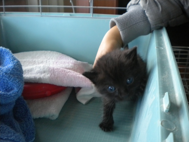 TITOF (chaton noir) Sos_0613