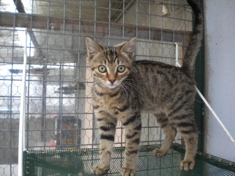 MOUSTACHE (chaton mâle tigré beige) Sos_1_14