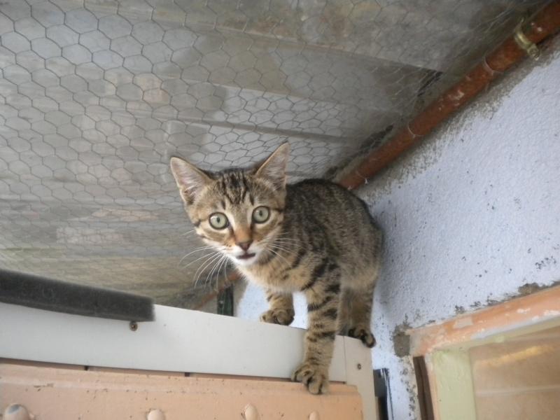 MOUSTACHE (chaton mâle tigré beige) Sos_1_15