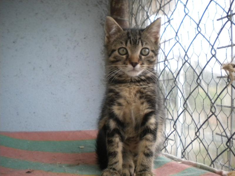 POPSY (chaton mâle tigré foncé) Sos_1_17